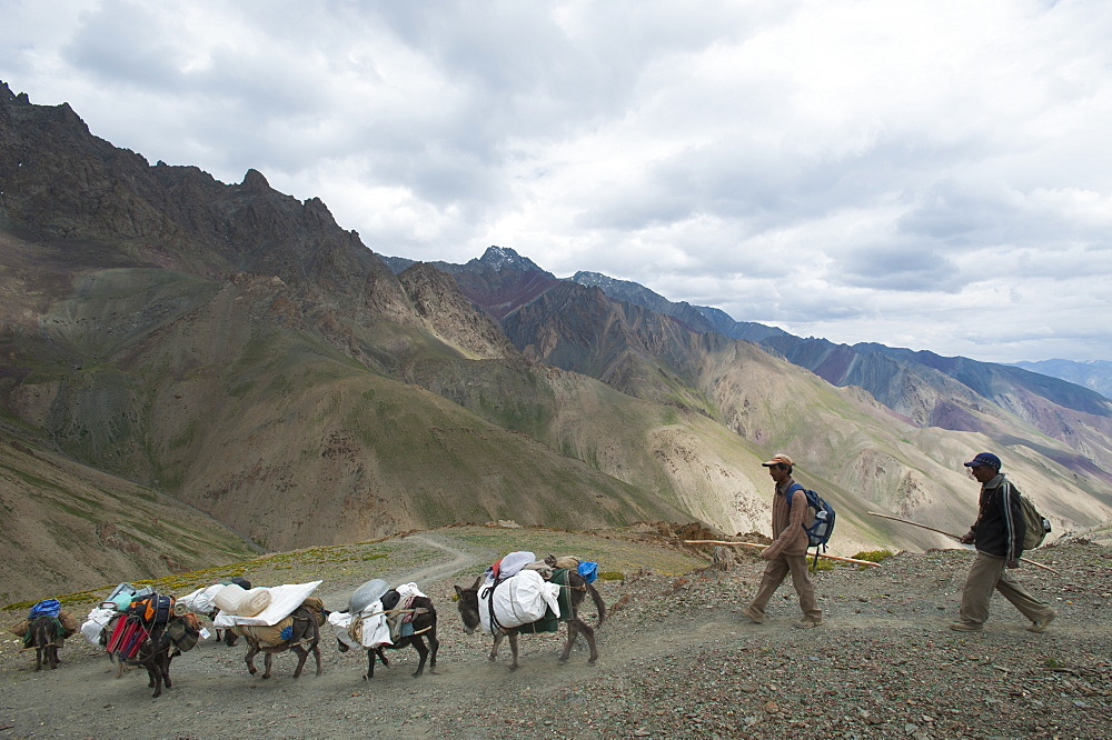Pack horses laden with trekking equipment cross the Konze La on the Hidden Valleys trek, Ladakh, India, Asia