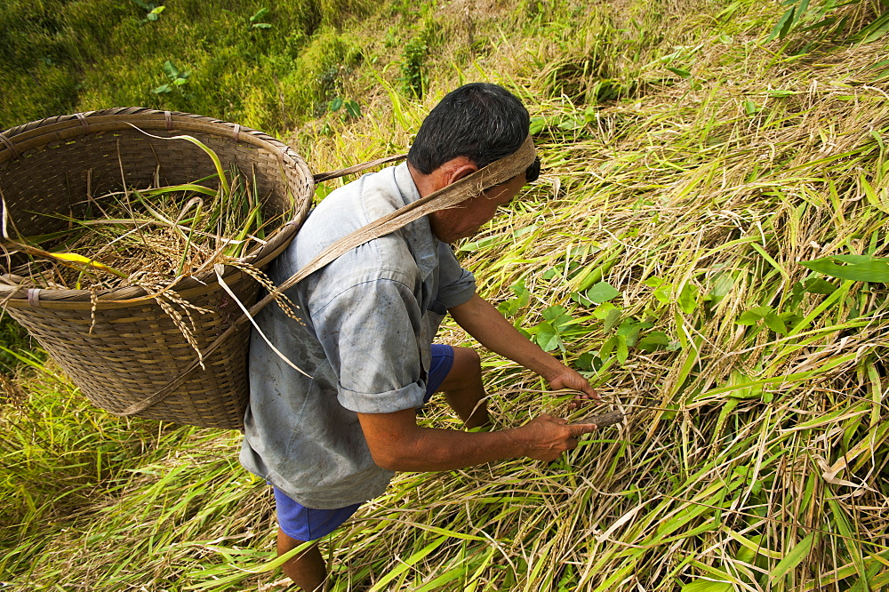 A man works in a Jhum field (mixed cropping) in Rangamati in Bangladesh
