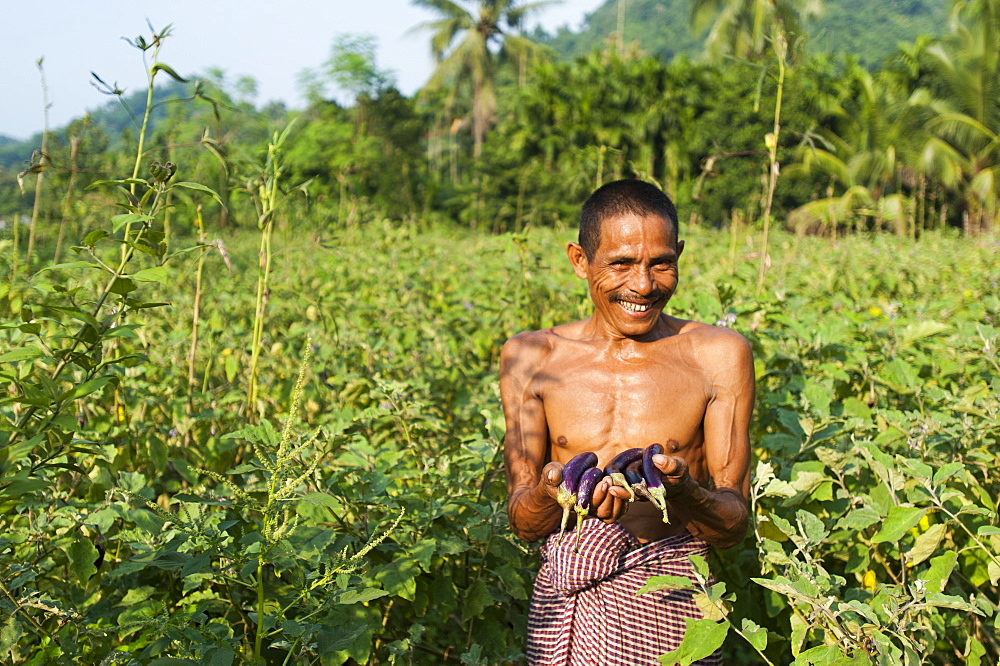A man holds up freshly picked aubergines, Chittagong Hill Tracts, Bangladesh, Asia