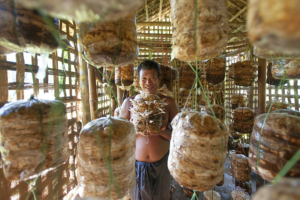 A man holds up a basket of growing mushrooms in a mushroom hut, Chittagong Hill Tracts, Bangladesh, Asia