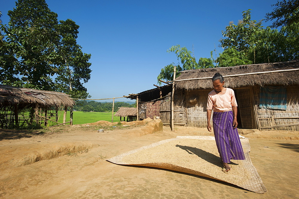 A woman dries wheat in the sun, Chittagong Hill Tracts, Bangladesh, Asia