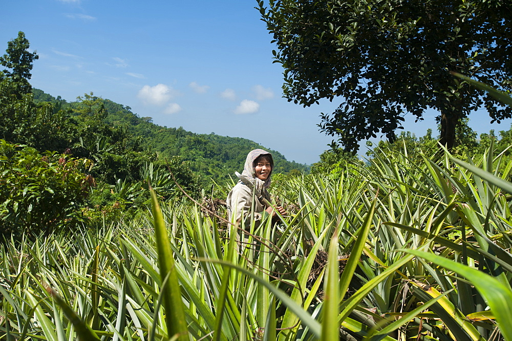 A Jhum farmer stands in a field of pineapple plants, Chittagong Hill Tracts, Bangladesh, Asia