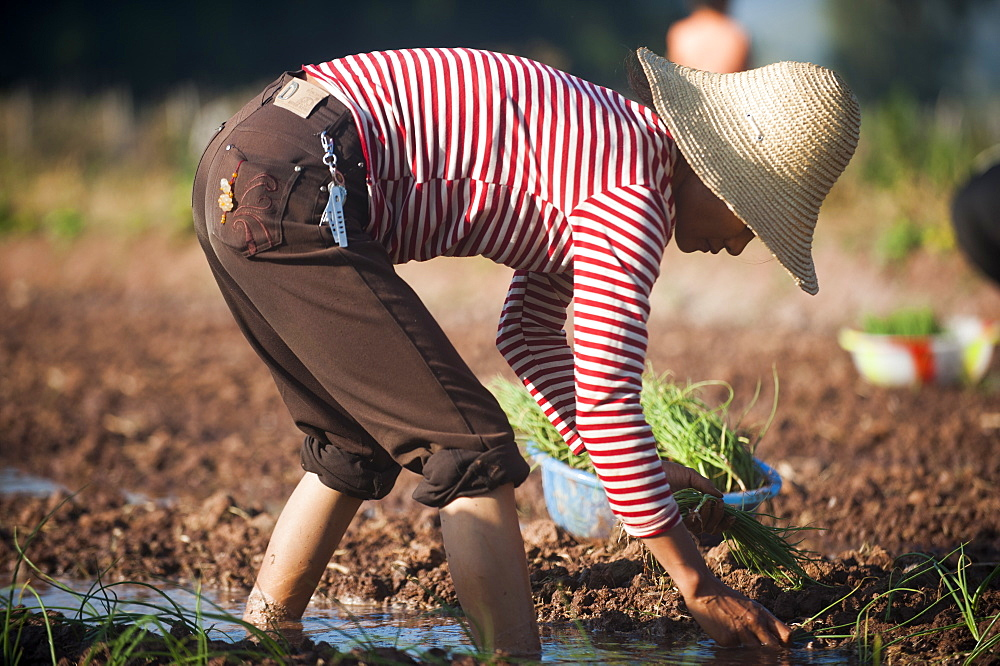 A woman working in the fields plants vegetables in Yunnan province in China