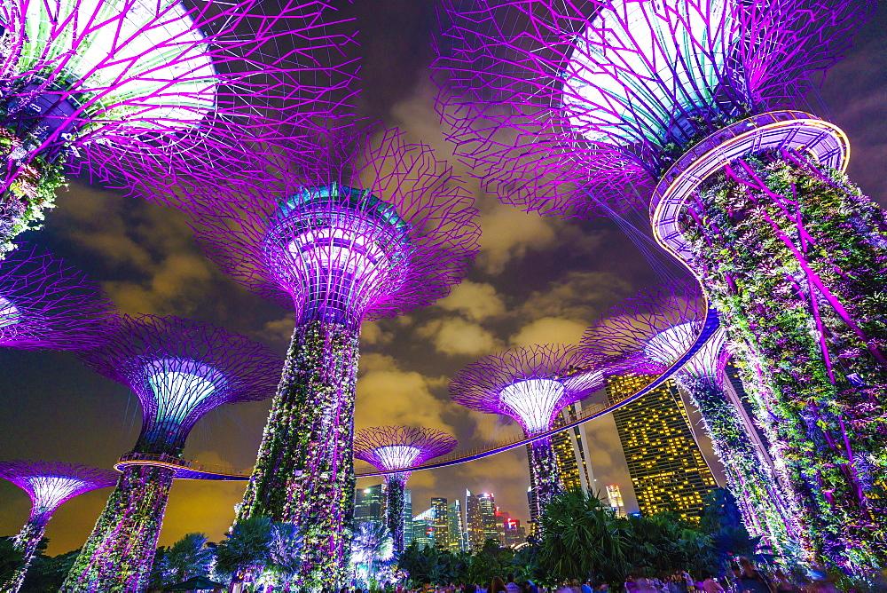 Supertree Grove in the Gardens by the Bay, a futuristic botanical gardens and park, illuminated at night, Marina Bay, Singapore, Southeast Asia, Asia - 1226-88