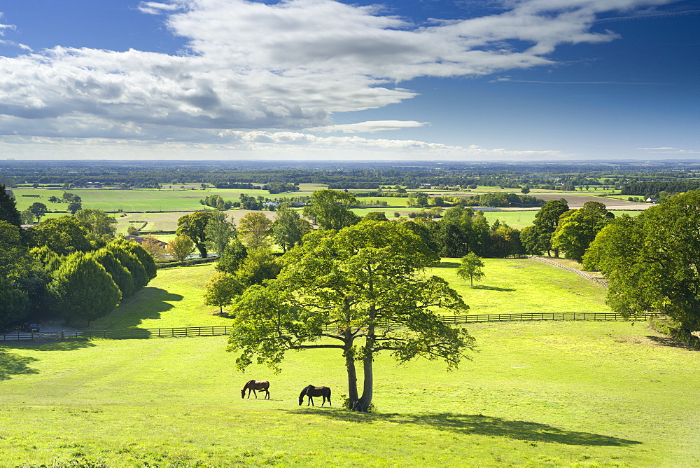 Horses grazing in a paddock at the hilltop village of Crayke in North Yorkshire - 1228-108