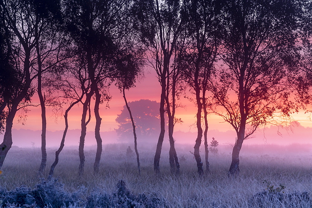 A misty cool sunrise over Strensall Common near York, North Yorkshire, England, United Kingdom, Europe - 1228-109