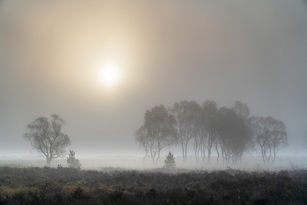 A misty autumn sunrise over Strensall Common Nature reserve near York, North Yorkshire, Yorkshire, England, United Kingdom, Europe - 1228-123