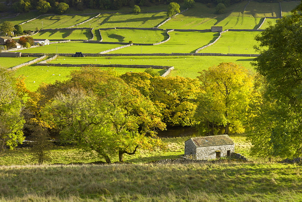 Kettlewell village field sysyem, out barns and dry stone walls, in Wharfedale, The Yorkshire Dales, Yorkshire, England, United Kingdom, Europe