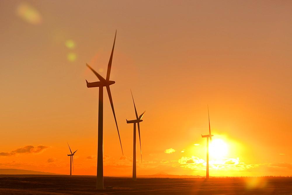 Wind turbines at sunset, Whitelee Wind Farm, East Renfrewshire, Scotland, United Kingdom, Europe - 1237-18