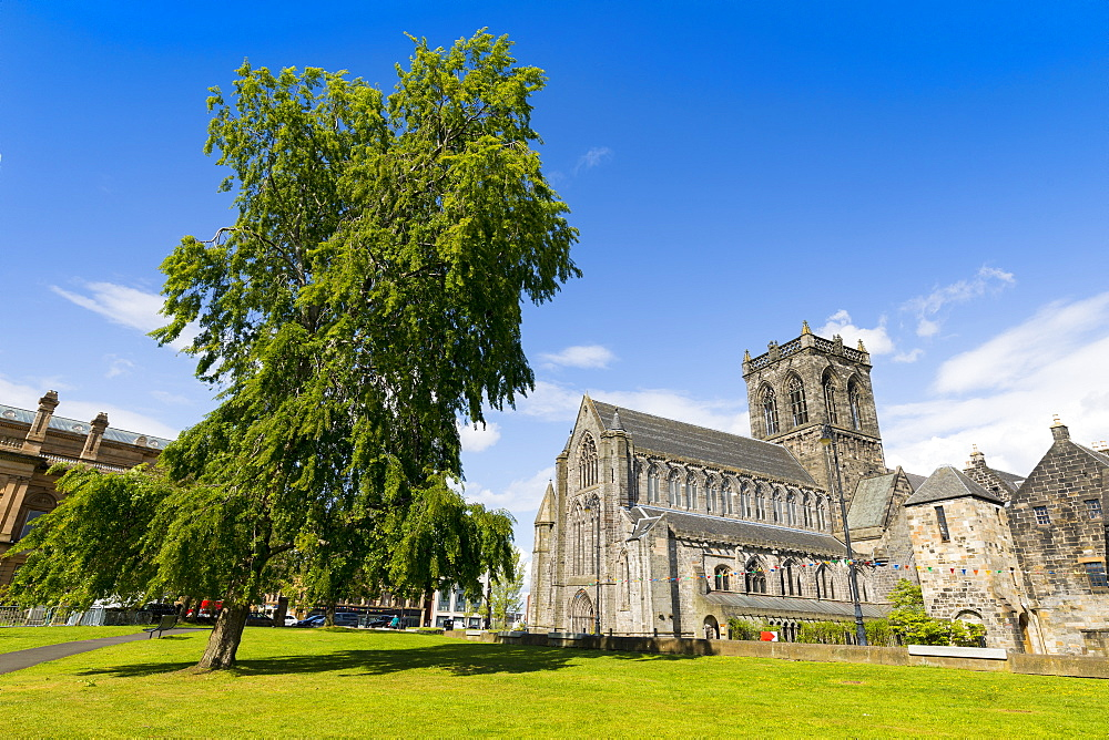 Paisley Abbey and tree, Renfrewshire, Scotland, United Kingdom, Europe - 1237-81