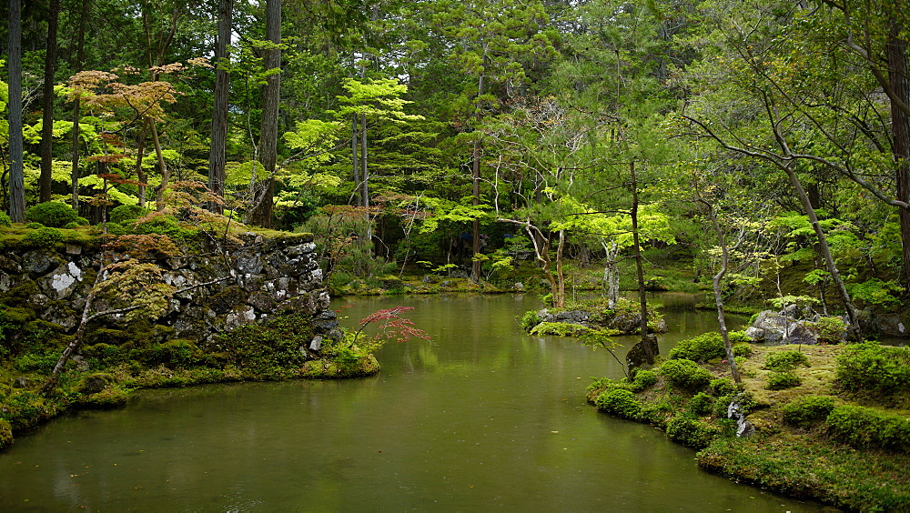 The moss gardens of Saiho-ji temple, Kyoto, Japan, Asia