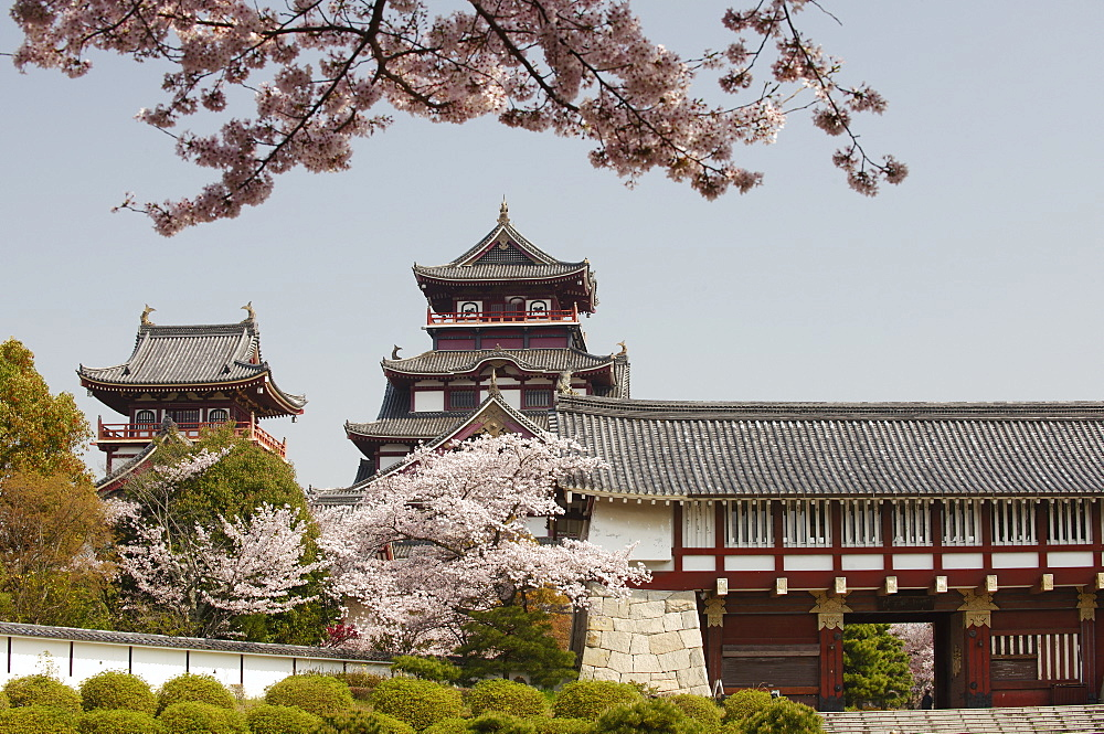 Momoyama castle during cherry blossom season, Kyoto, Japan, Asia - 1238-103