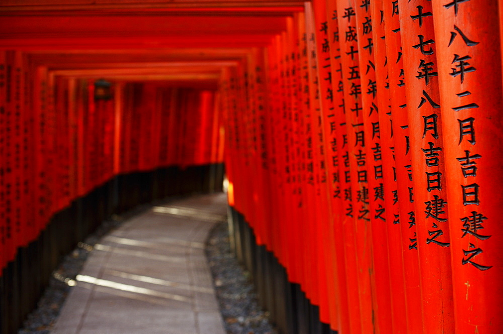 Path under red torii in Fushimi Inari shrine, Kyoto, Japan, Asia