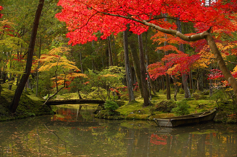 Autumn colours in the moss garden of Saiho-ji temple, UNESCO World Heritage Site, Kyoto, Japan, Asia - 1238-127