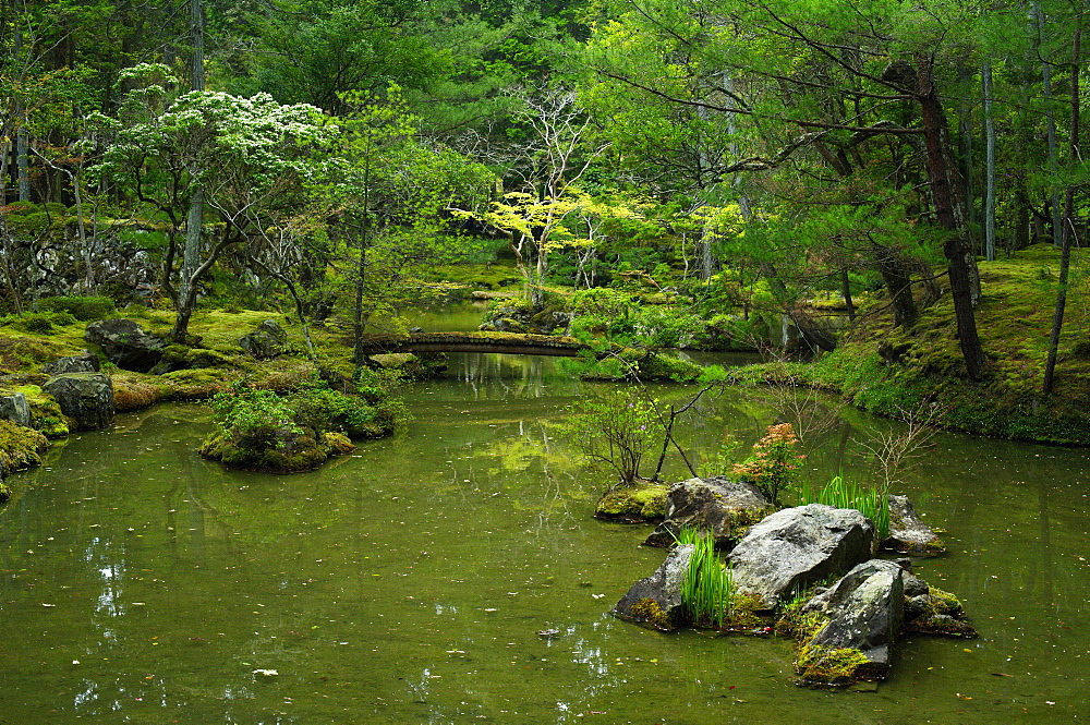 Pond in the moss garden of Saiho-ji temple, UNESCO World Heritage Site, Kyoto, Japan, Asia - 1238-130