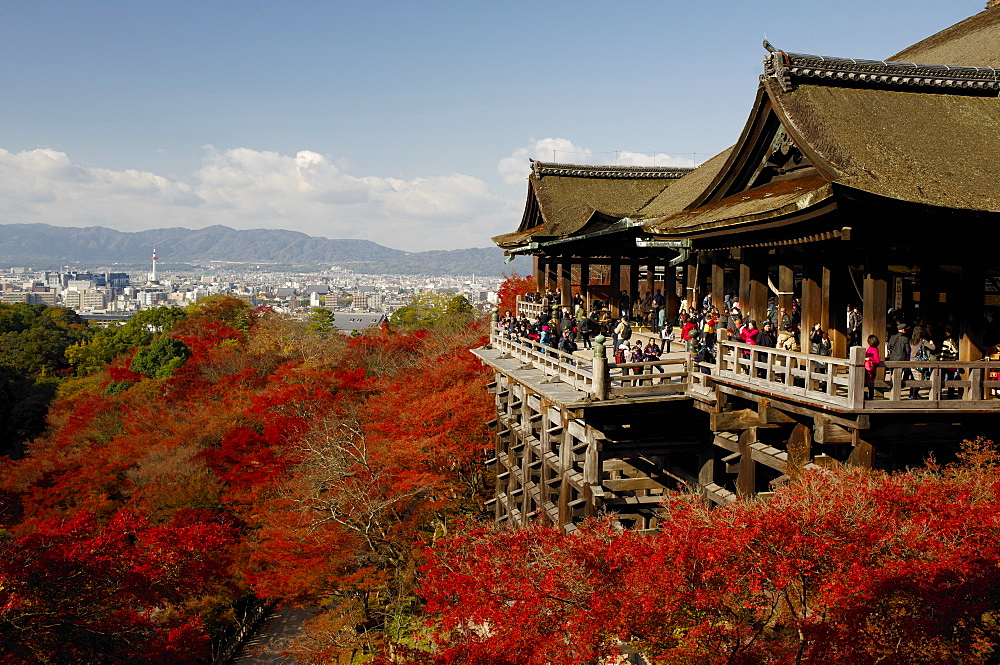 Kiyomizudera temple terrace overlooking Kyoto city, Kyoto, Japan, Asia - 1238-134