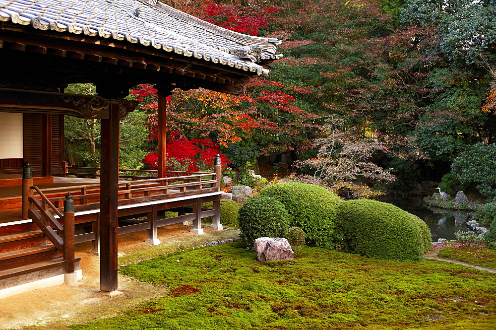 Zuishin-in temple moss garden in autumn, Kyoto, Japan, Asia - 1238-142