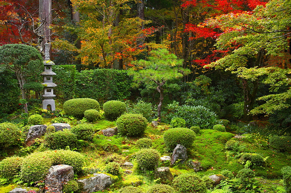 Zen garden in autumn, Sanzen-in Temple, Kyoto, Japan, Asia