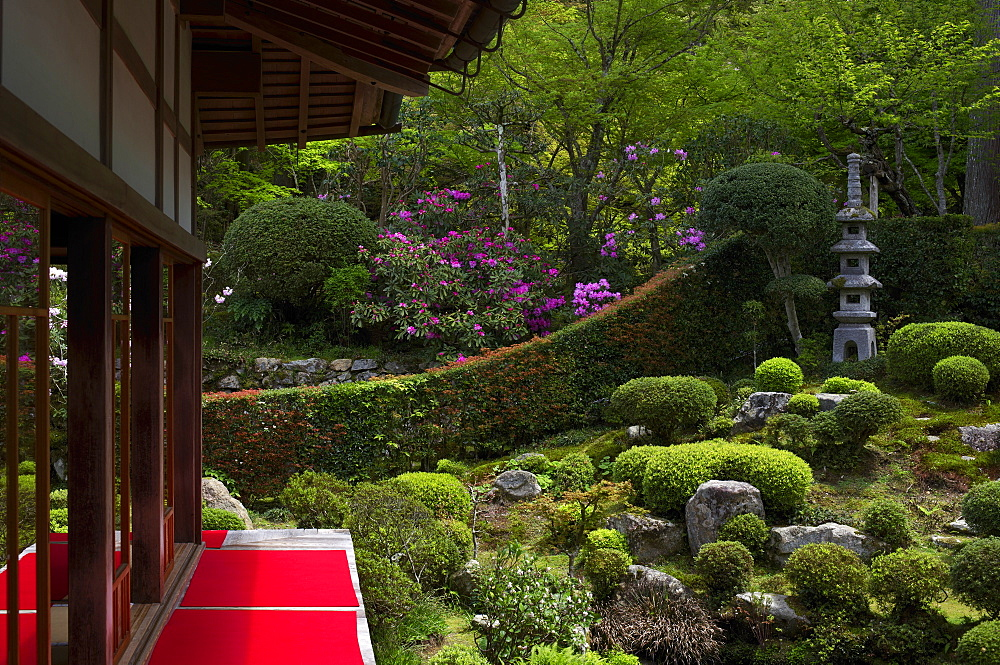 Rhododendron blooming in Zen garden, Sanzen-in Temple, Kyoto, Japan, Asia