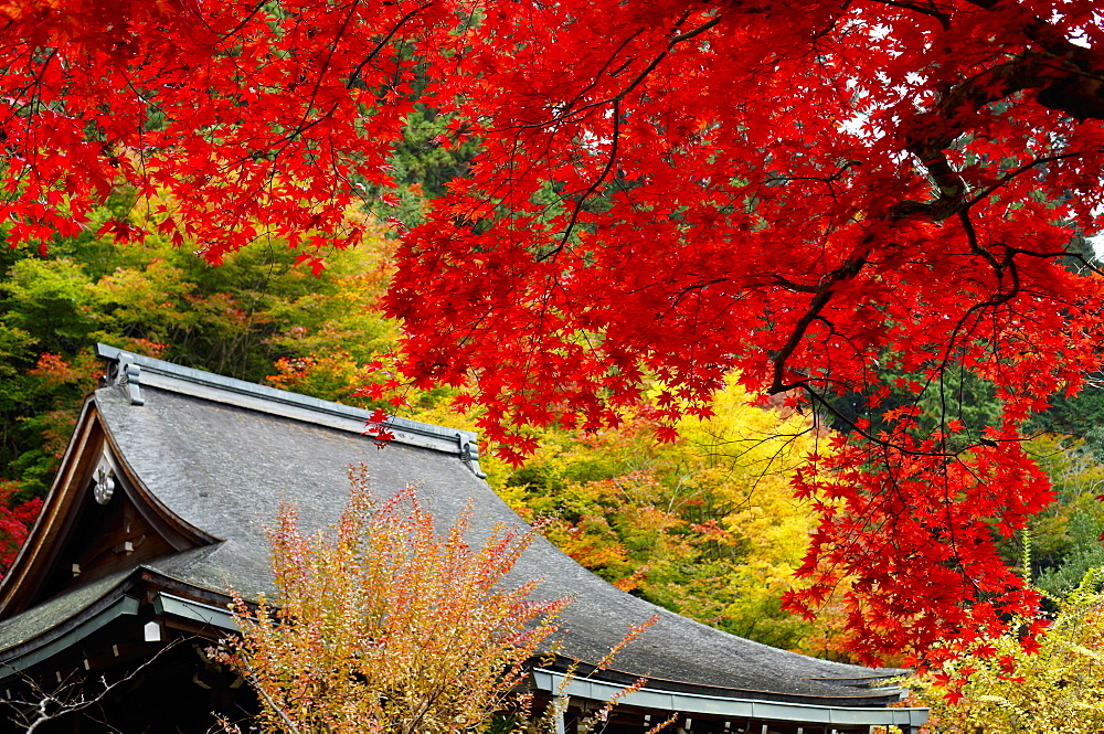 Stock photo of Jakko-in Temple main hall in autumn