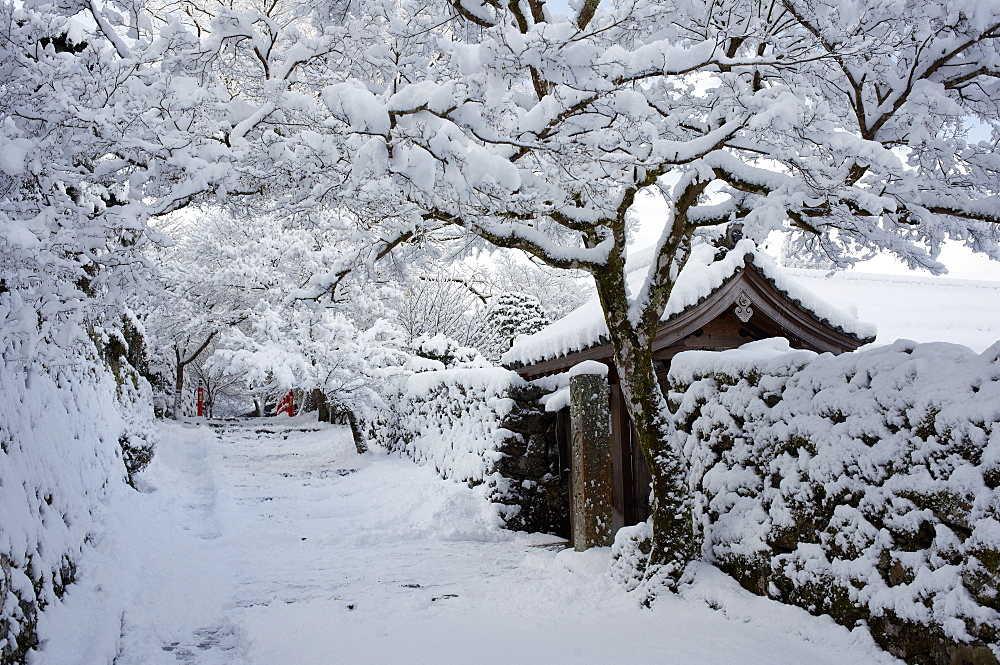 Fresh snow on Jikko-in Temple entrance, Ohara valley, Kyoto, Japan, Asia - 1238-51