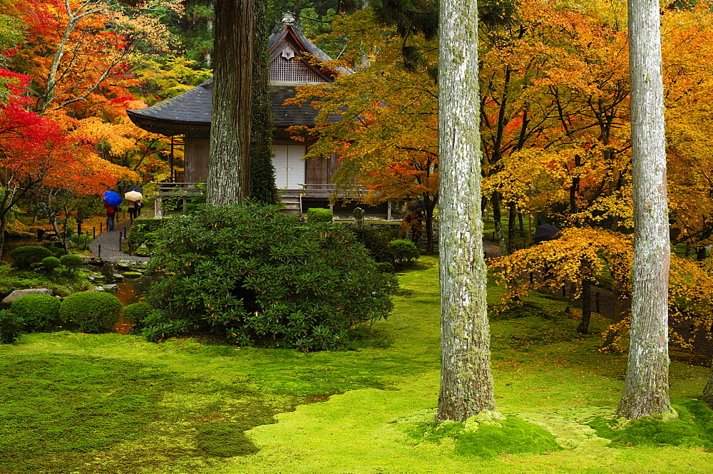 Autumn colours in Sanzen-in Temple moss garden, Ohara valley, Kyoto, Japan, Asia - 1238-52