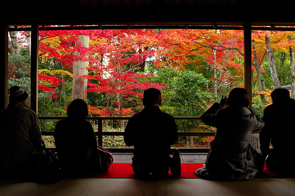 Admiring autumn colours in Daiho-in temple, Kyoto, Japan, Asia - 1238-57
