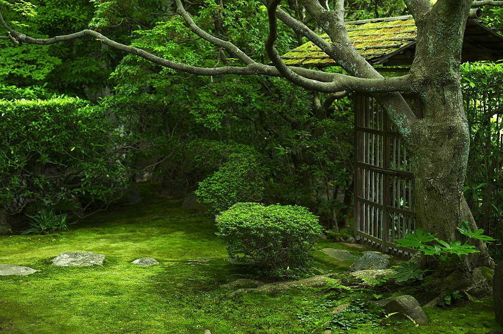 Moss garden, Keishun-in temple, Kyoto, Japan, Asia