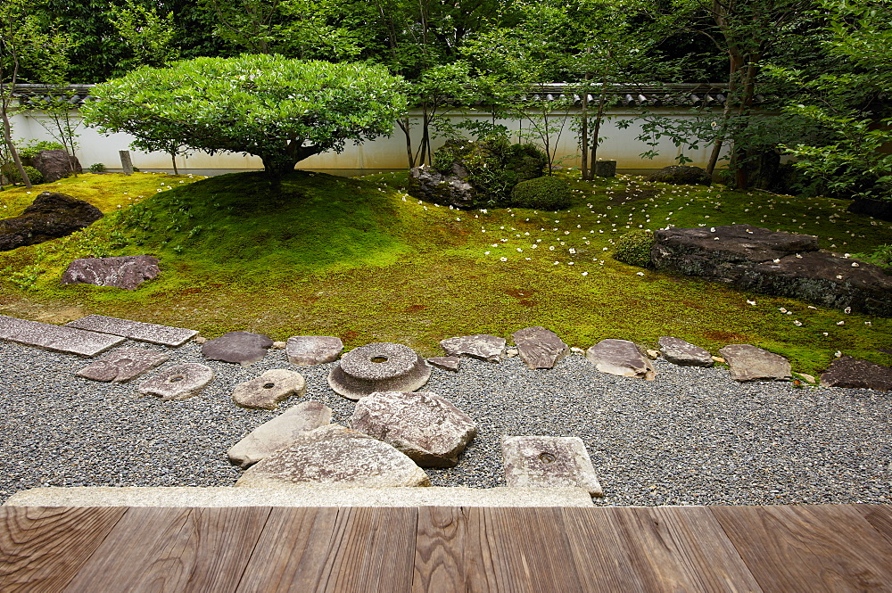 Sala flowers fallen on moss garden, Torin-in temple, Kyoto, Japan, Asia
