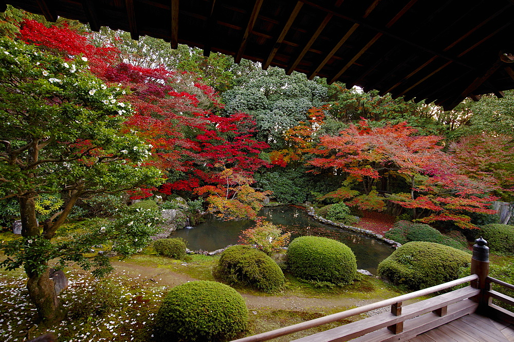 Autumn in Zuishin-in temple garden, Kyoto, Japan, Asia - 1238-71
