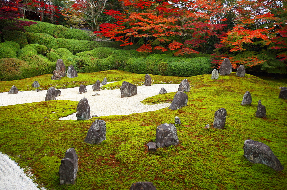 Komyo-in temple moss garden in autumn, Kyoto, Japan, Asia - 1238-85
