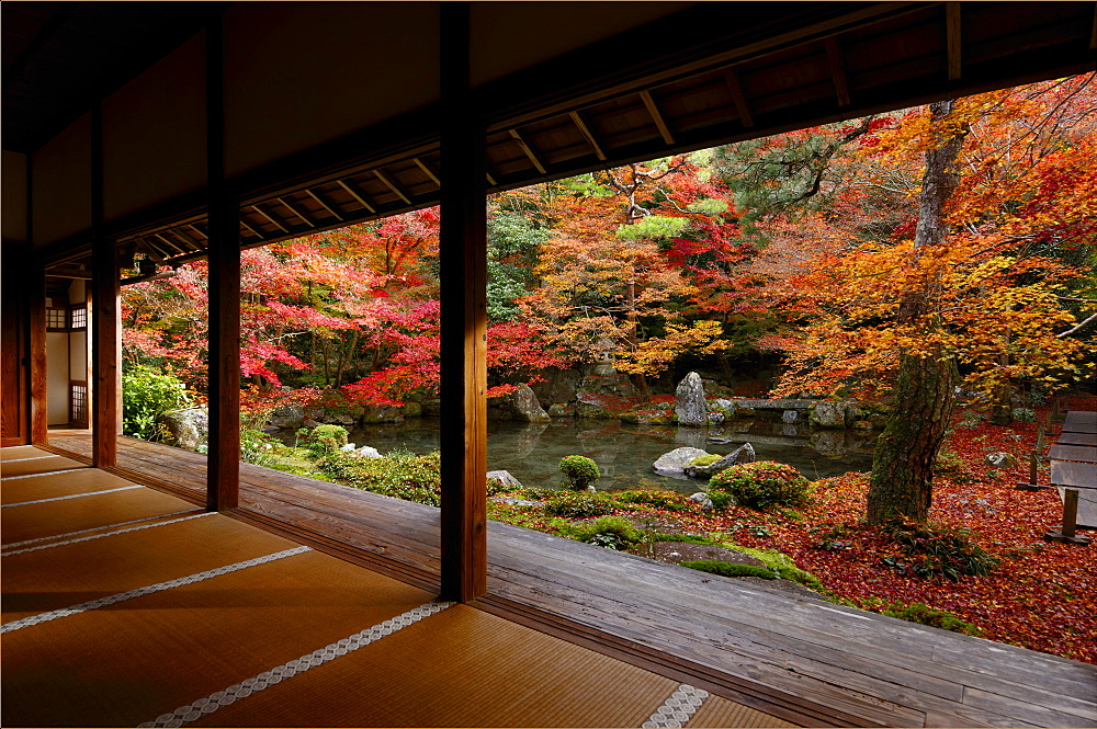 Late autumn in Renge-ji temple pond garden, Kyoto, Japan, Asia - 1238-97