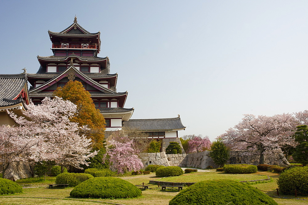 Momoyama castle during cherry blossom season, Kyoto, Japan, Asia - 1238-98