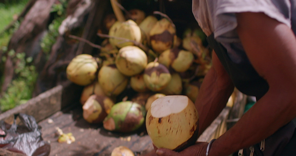 Local street vendor chopping up coconut, Annandale Falls, Grenada, West Indies, Caribbean