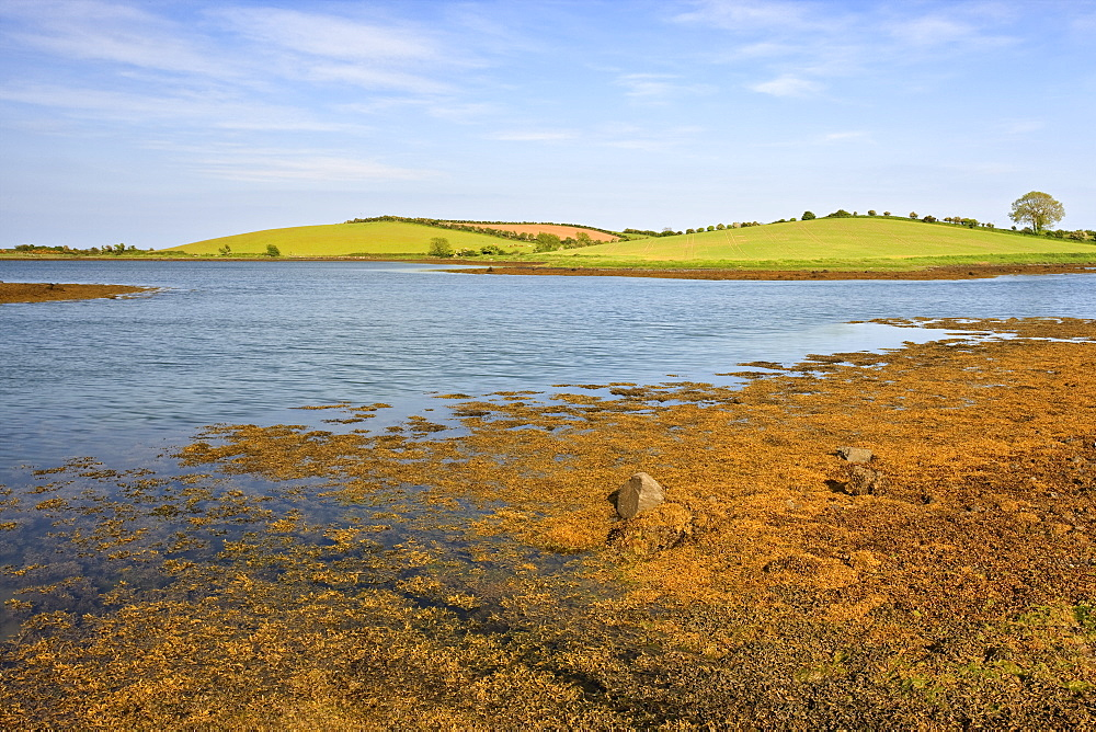Strangford Lough, County Down, Ulster, Northern Ireland, United Kingdom, Europe