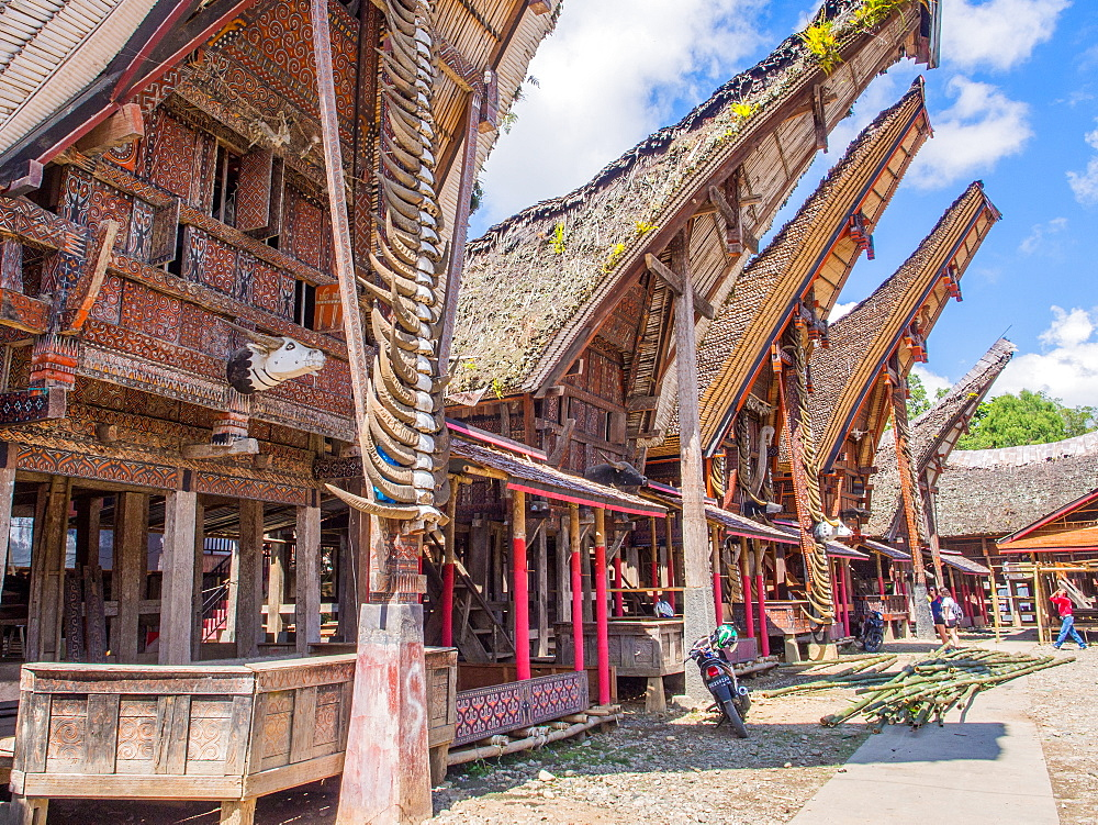 Row of traditional houses (tongkanon), Tana Toraja, Sulawesi, Indonesia, Southeast Asia, Asia
