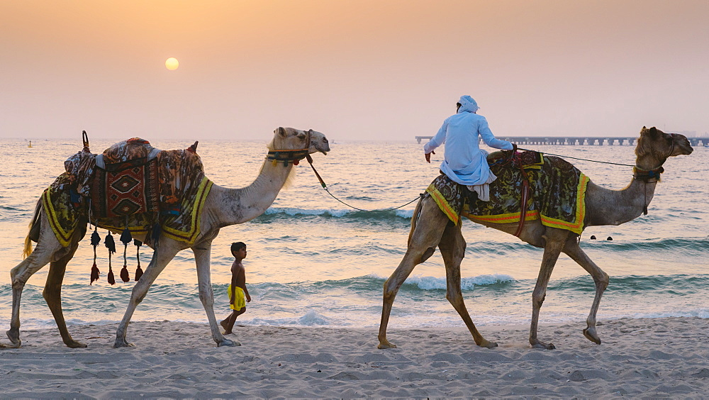 A young boy follows a man riding a camel in Dubai, United Arab Emirates, Middle East