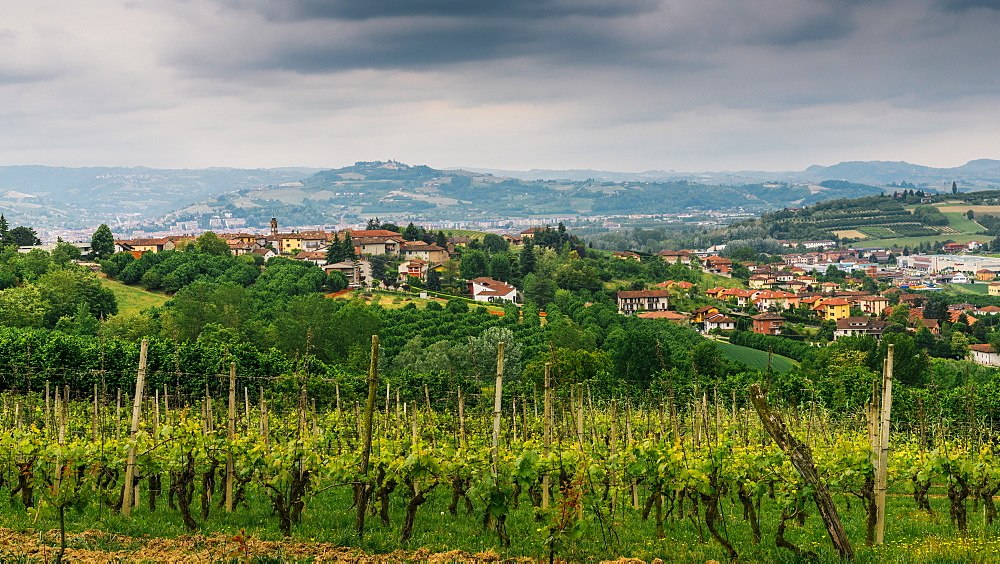 Vineyards in the Piedmont region of northern Italy, Europe - 1243-84