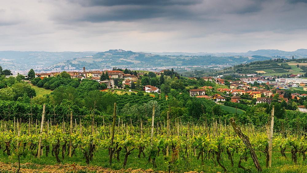 Vineyards in the Piedmonte region of northern Italy - 1243-84