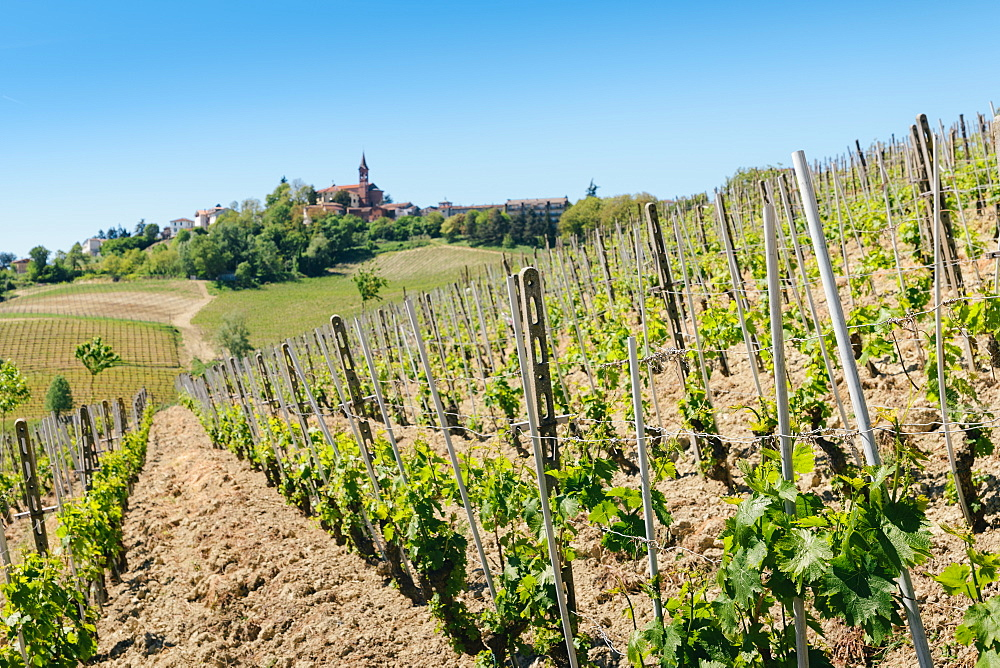 Vineyards in the Piedmont region of northern Italy, Europe - 1243-86