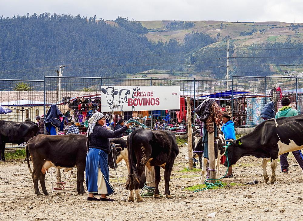 Saturday Livestock Market, Otavalo, Imbabura Province, Ecuador, South America