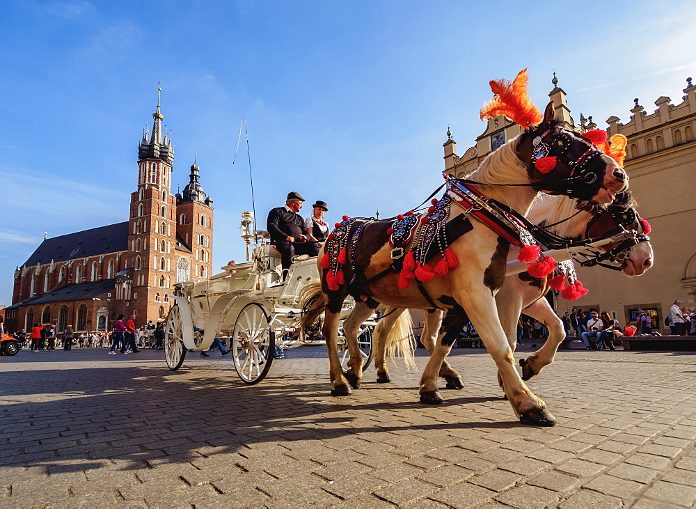 Poland, Lesser Poland Voivodeship, Cracow, Main Market Square, Horse Carriage with St. Mary Basilica in the background