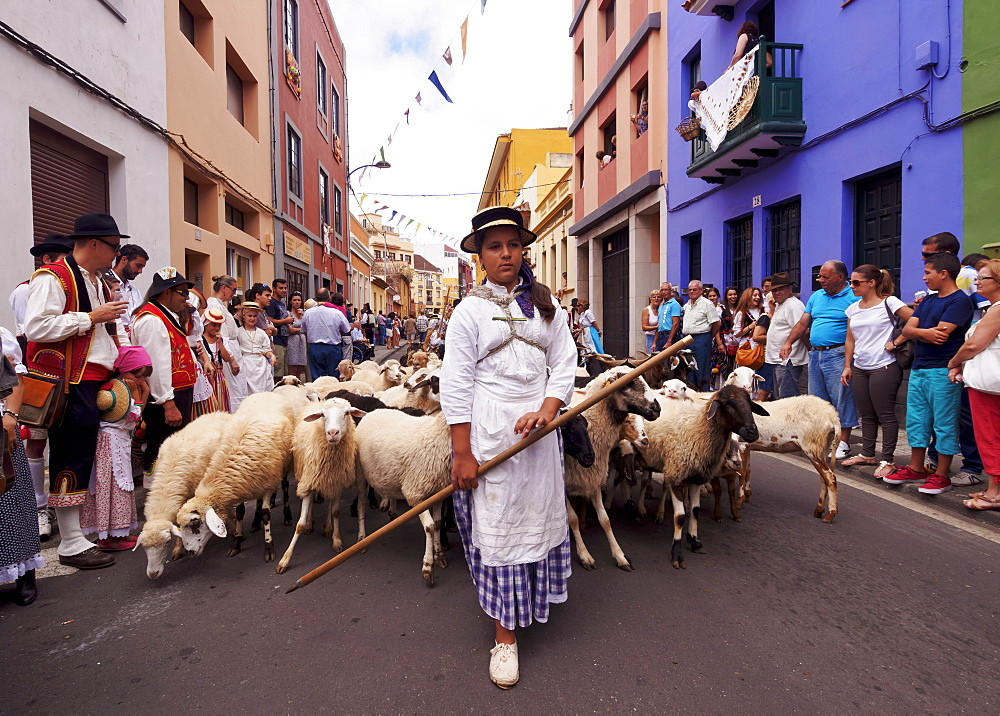 Woman with sheep, Romeria de San Benito de Abad, traditional street party, San Cristobal de La Laguna, Tenerife Island, Canary Islands, Spain, Europe