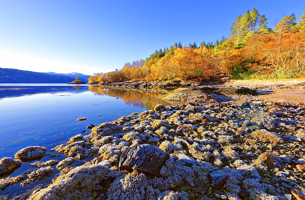An autumn view on a calm sunny morning along the banks of Loch Sunart in the Ardnamurchan Peninsula, the Scottish Highlands, Scotland, United Kingdom, Europe