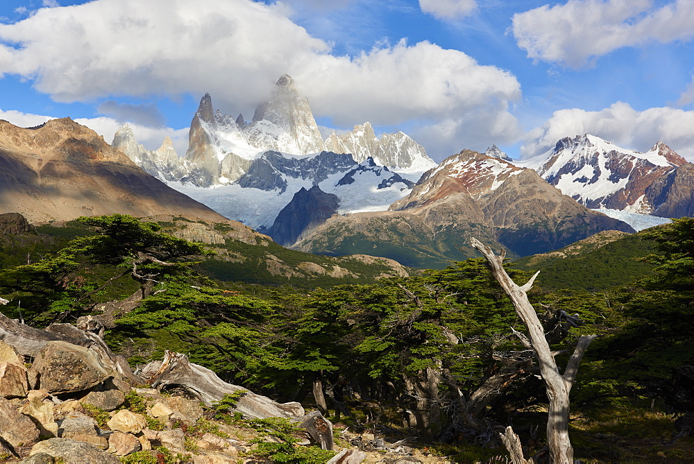 Wide angle landscape featuring Monte Fitz Roy in the background and tree in the foreground, Patagonia, Argentina, South America