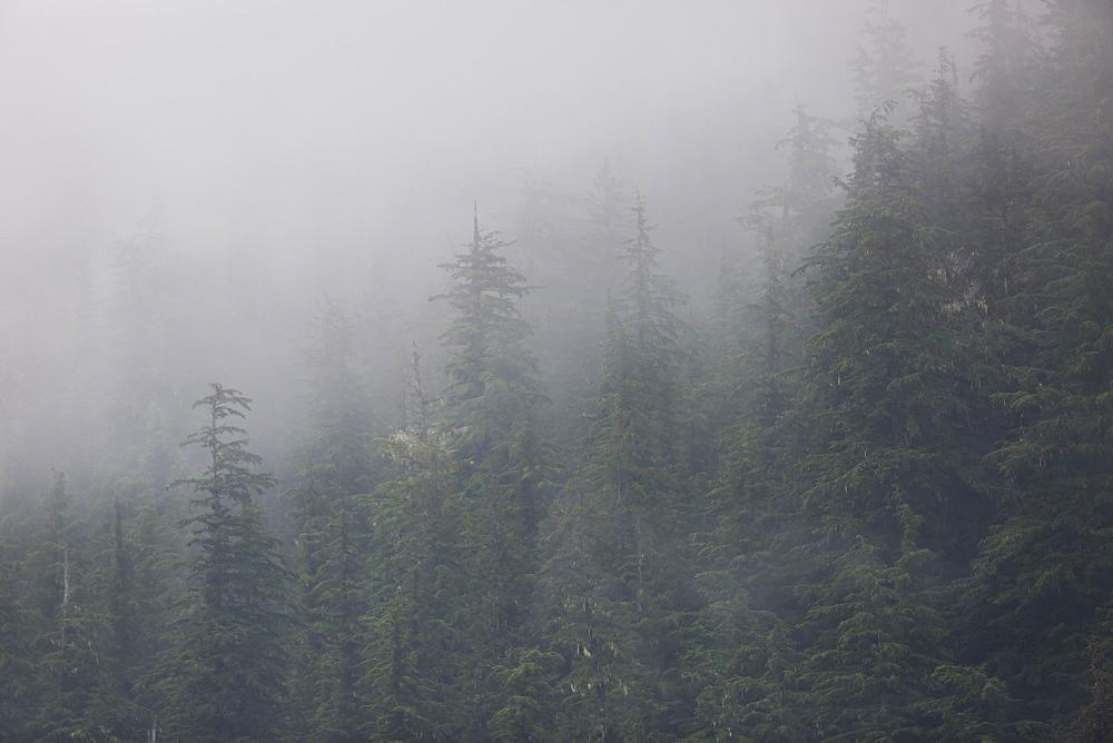 Chugach National Forest, Alaska, United States of America, North America - 1249-39