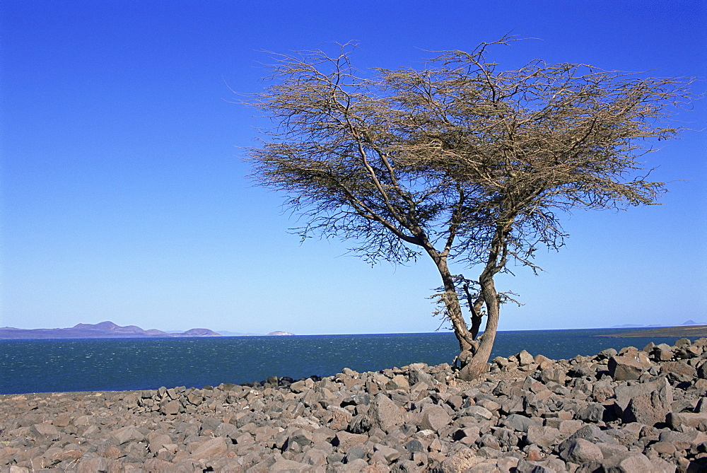 Lake Turkana, Kenya, East Africa, Africa
