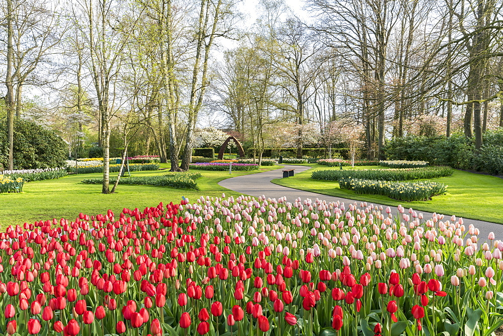 Red and pink tulips at Keukenhof Gardens, Lisse, South Holland province, Netherlands, Europe