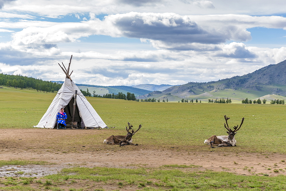 Woman from the Reindeer People with their typical tent and two reindeers. Hovsgol province, Mongolia.