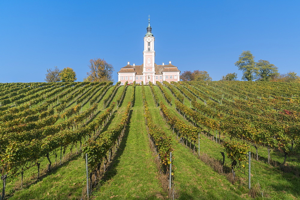 Birnau sanctuary and vineyards from below, Uhldingen-Muhlhofen, Baden-Wurttemberg, Germany, Europe - 1251-419